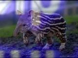 Необычные животные планеты